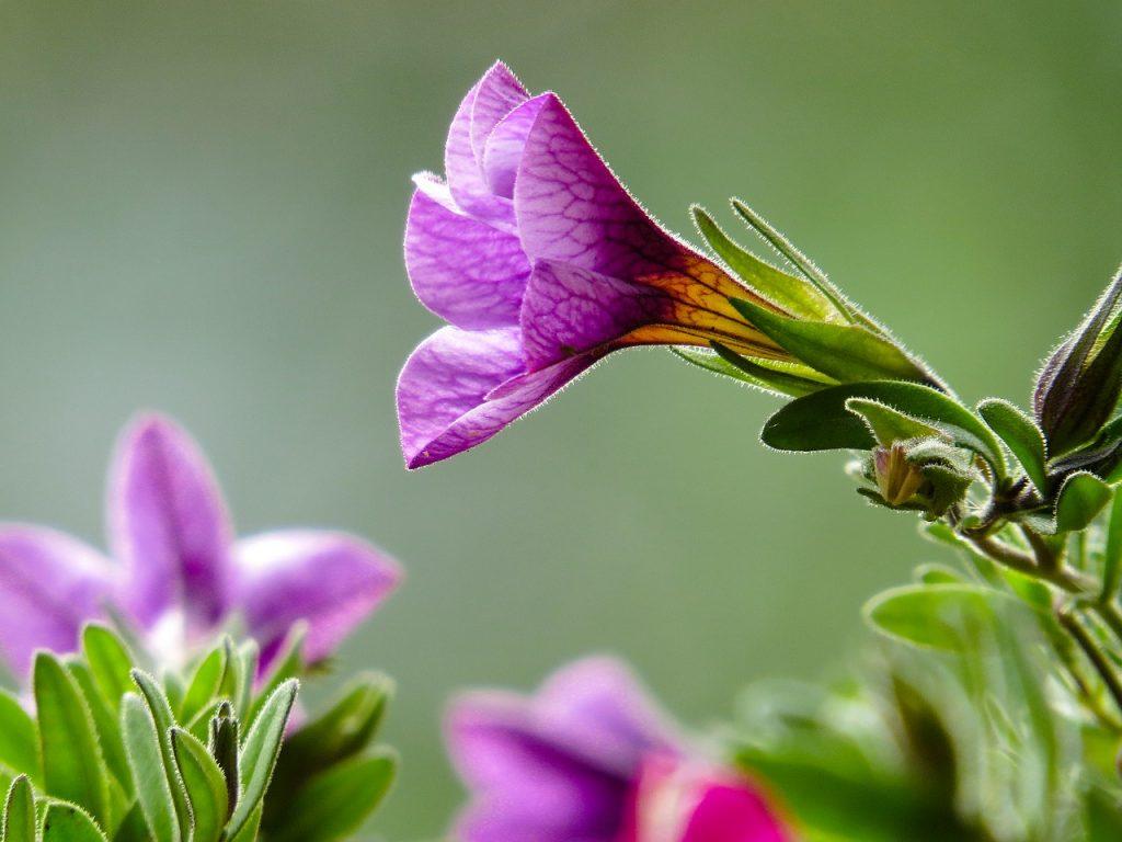 Jakie rośliny wielosezonowe wybrać do ogrodu?